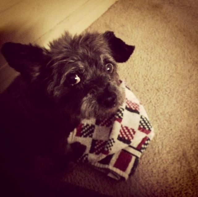 woman-adopts-abandoned-dying-dog-chester-nicole-elliott-12
