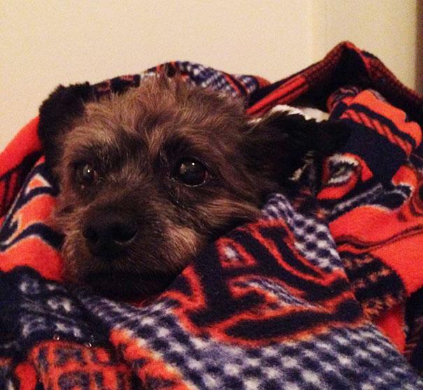 woman-adopts-abandoned-dying-dog-chester-nicole-elliott-16