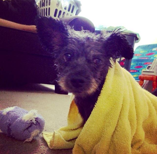woman-adopts-abandoned-dying-dog-chester-nicole-elliott-2