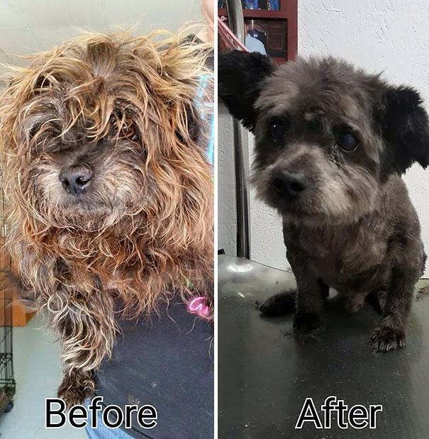 woman-adopts-abandoned-dying-dog-chester-nicole-elliott-6
