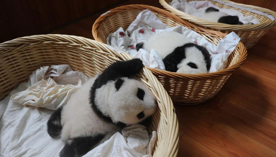ębaby-panda-basket-yaan-debut-appearance-china-32