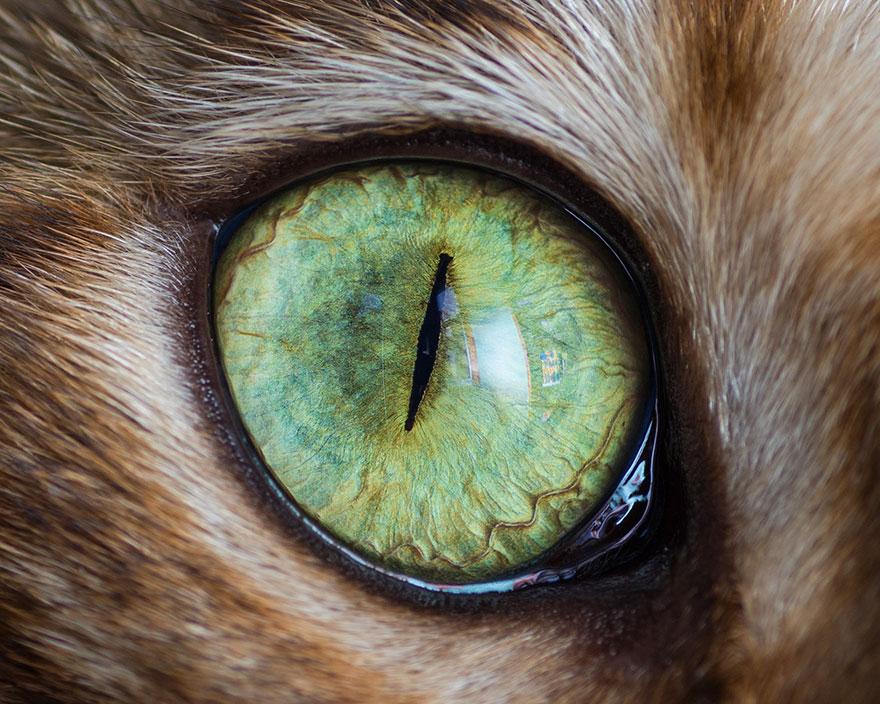 15 Macro Shots Of Cat Eyes From My Recent Cat-O-Shoot ...