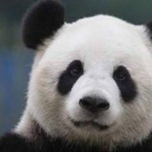 Annelies Panda