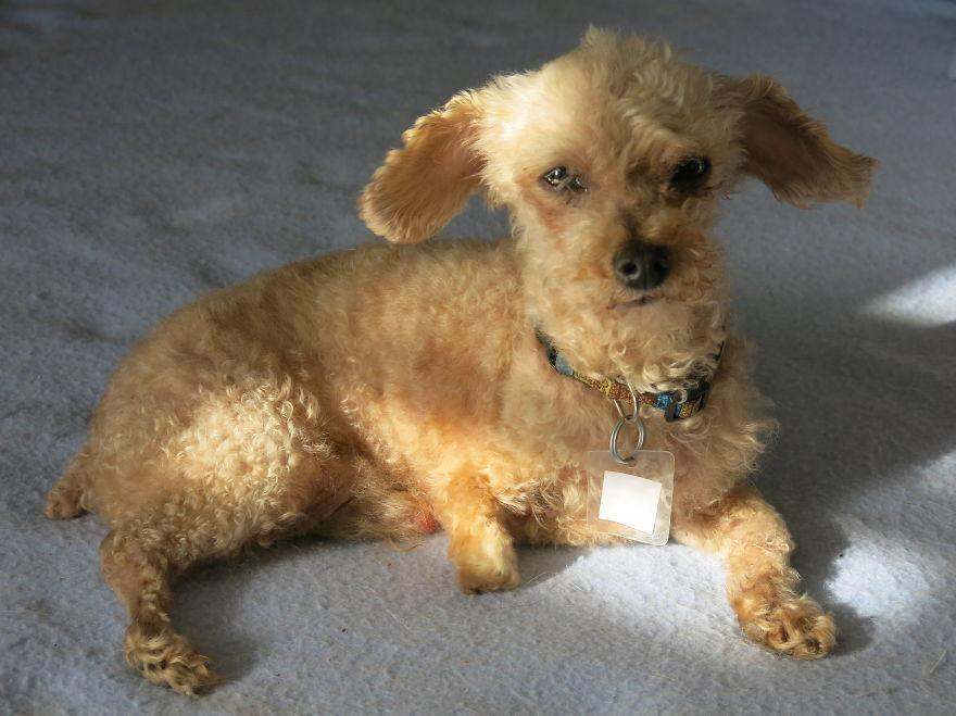 Этот пёс провел 10 лет на улице и был в шаге от смерти, но любовь творит чудеса...