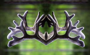Mirrored Reindeer Antlers Create Psychedelic Figures