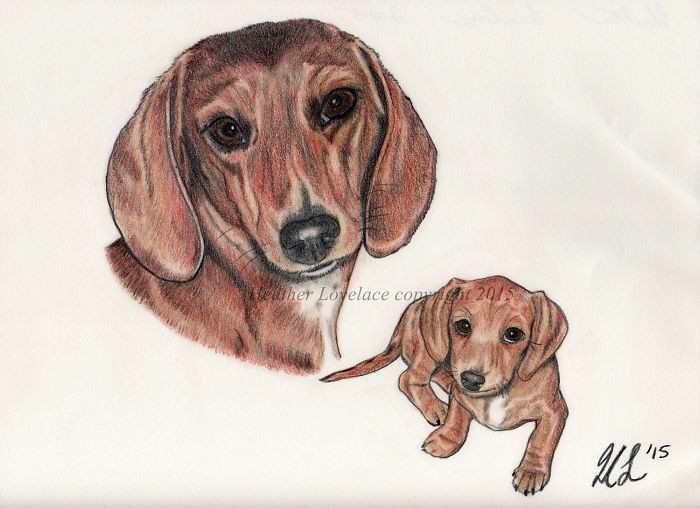 I Draw Custom Pet Portraits In Pencil
