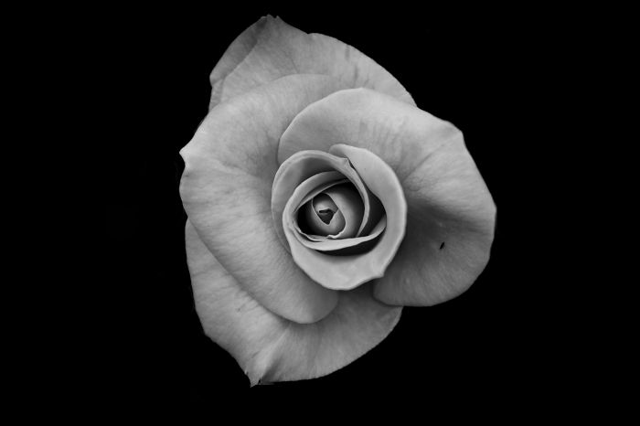 I Take Black & White Photos Of Garden Flowers To Show The Beautiful Symmetry Of Nature