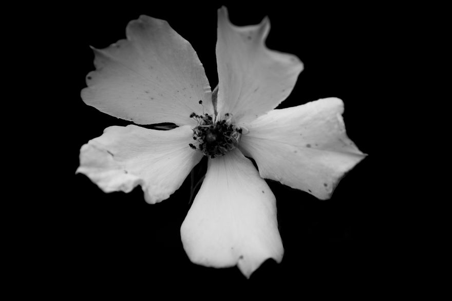 I take black white photos of garden flowers to show the beautiful anyone can write on bored pandaart writing mightylinksfo