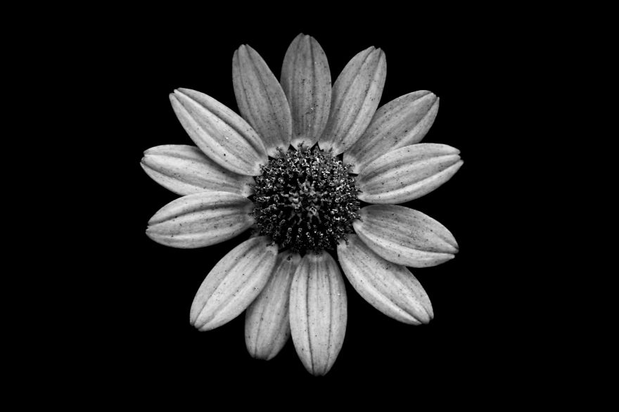black and white photography flowers wwwpixsharkcom