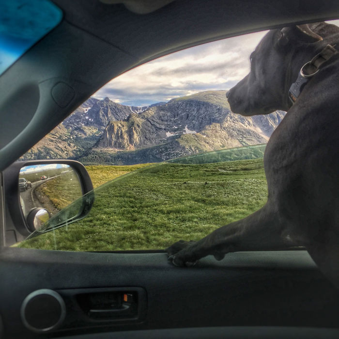 I Live In My Truck With My Dog And Travel Across The Country