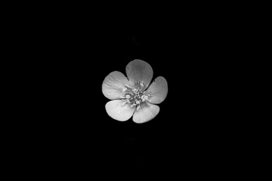 I Take Black White Photos Of Garden Flowers To Show The Beautiful