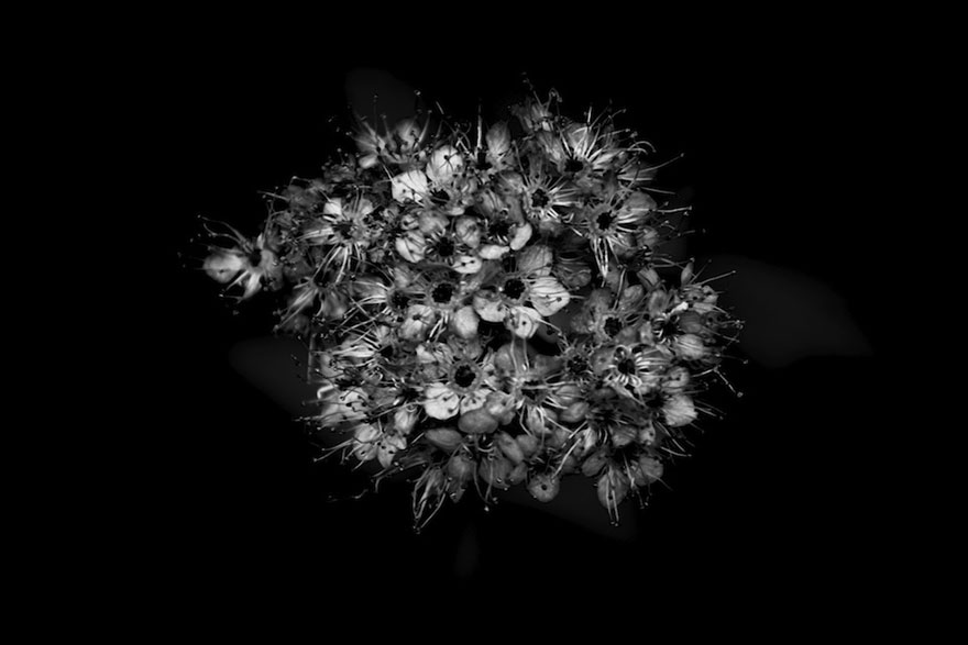 I take black white photos of garden flowers to show the beautiful more info facebook mightylinksfo Image collections