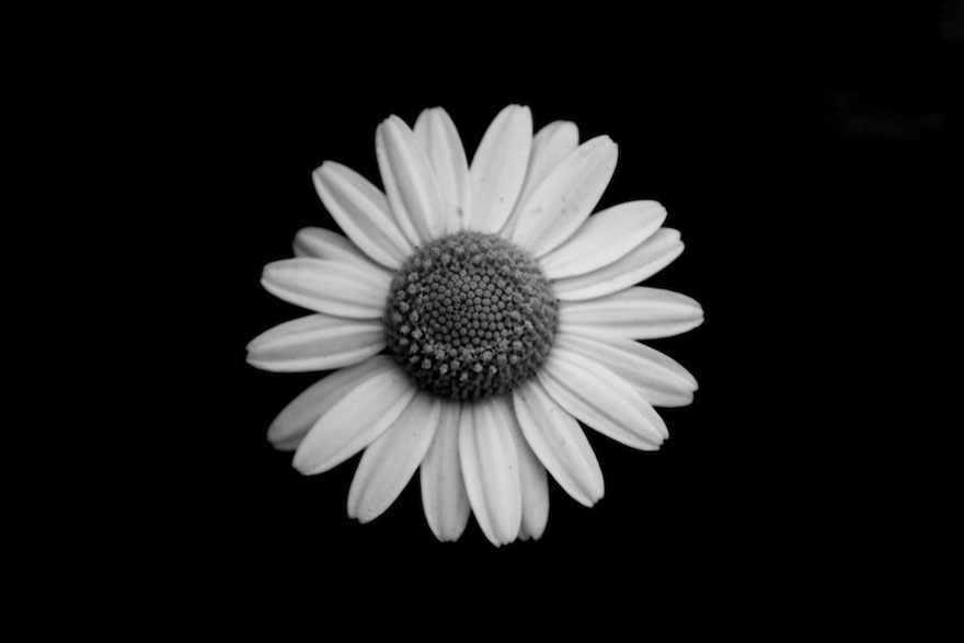 Black N White Pictures Flowers