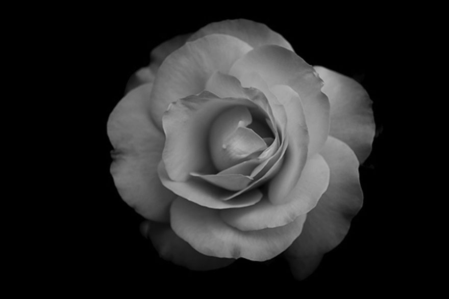 I take black white photos of garden flowers to show the beautiful symmetry of nature bored panda
