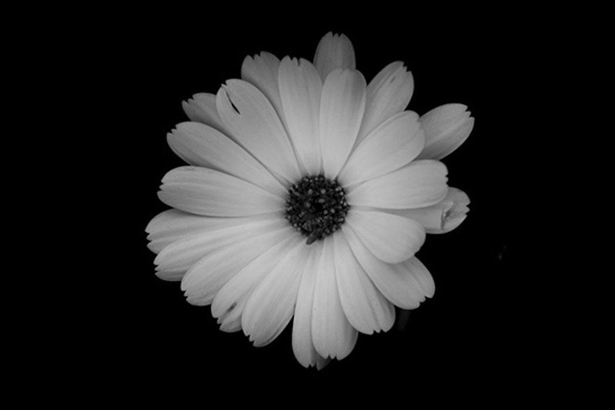 I Take Black White Photos Of Garden Flowers To Show The Beautiful