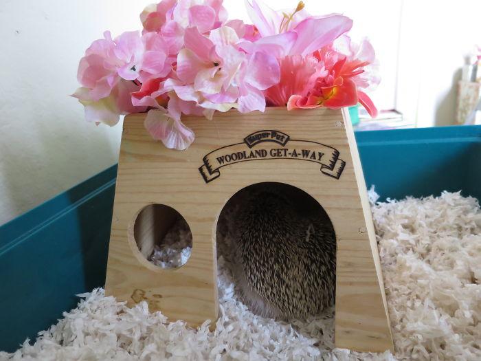 Hedgehog Home Makeover *3*