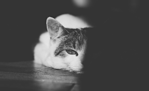 My Black And White Catography