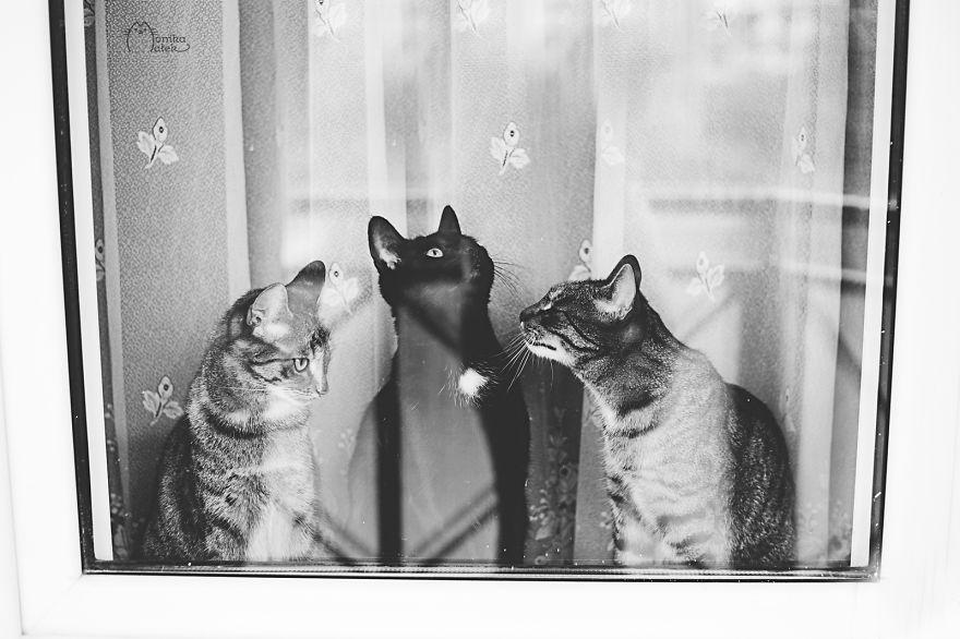 фото с котиком