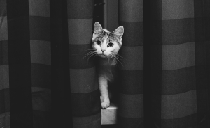 I Capture That Special Cat Look With Black And White Photography
