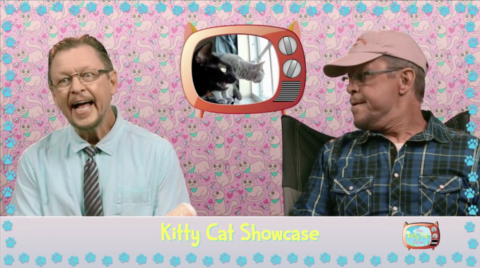 Weirdest Cat Video Show On The Web? You Decide.