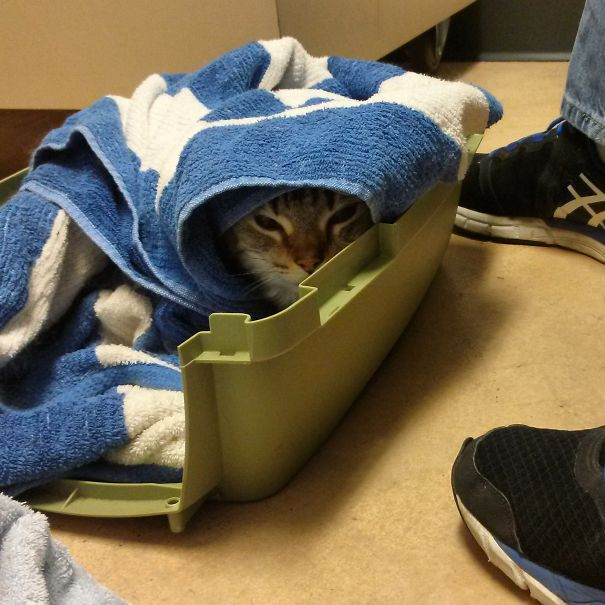 Is It Safe Under This Towel?