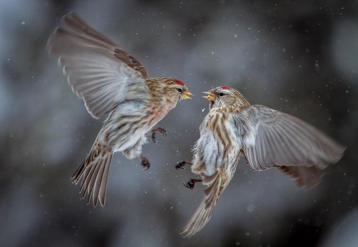 My Best Bird Photo!