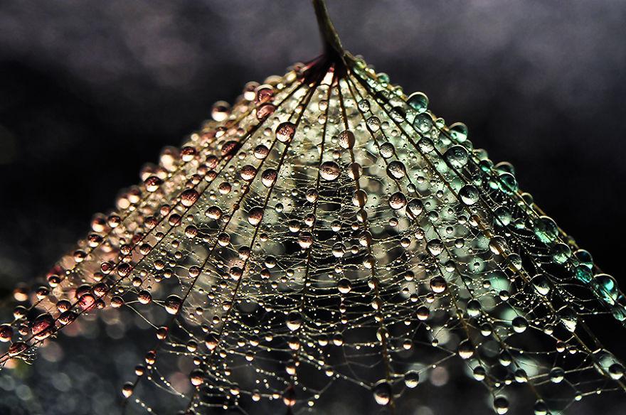 Stunning Macro Photos Of Water Droplets Reveal Their Hidden Beauty Macro-Images-Of-Ivelina-Blagoeva-10__880
