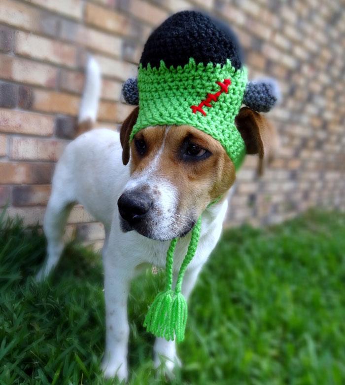Frankenstein Dog Hat