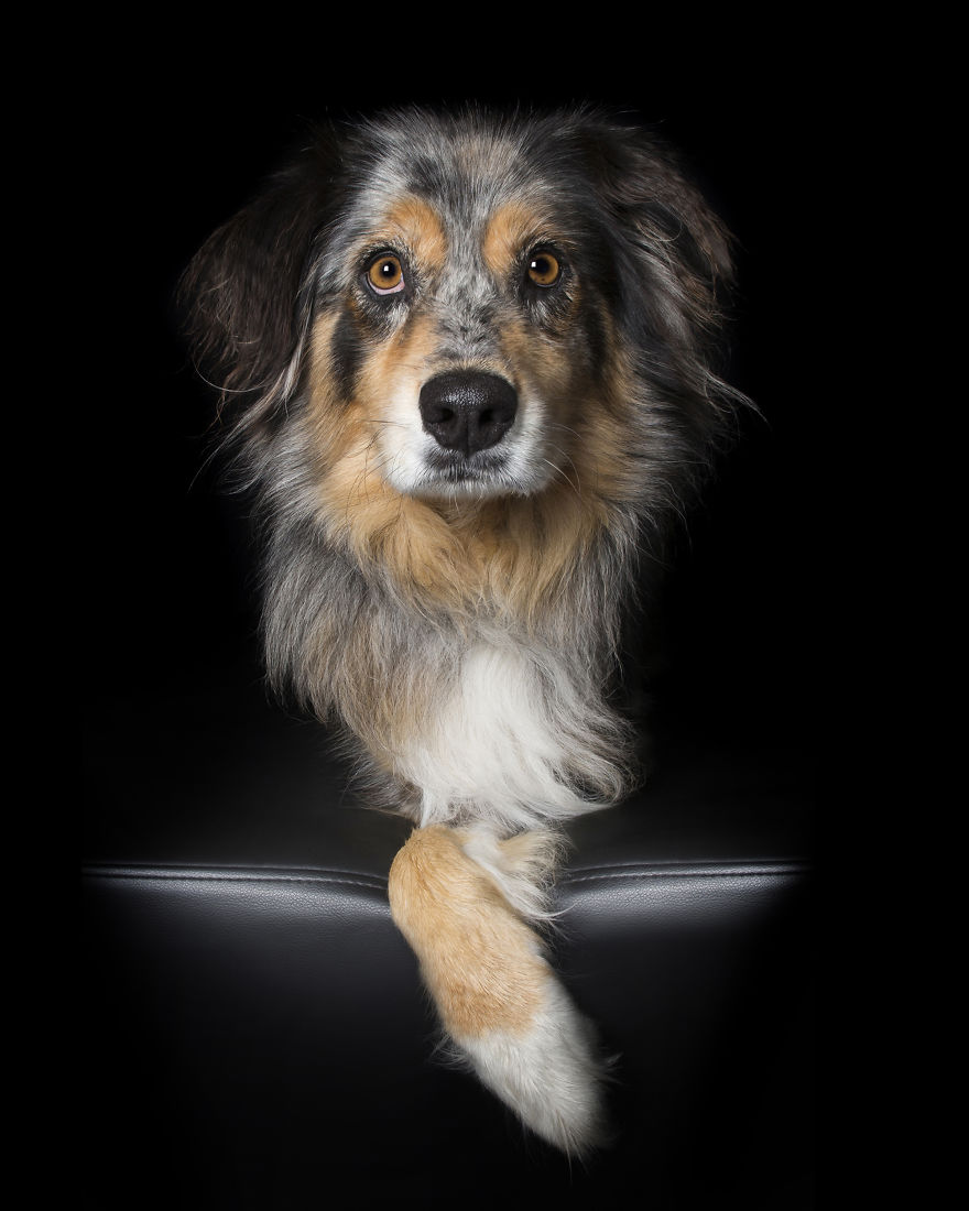 Perfect Imperfection: Photographer Documents The Beauty Of Animals With Disabilities