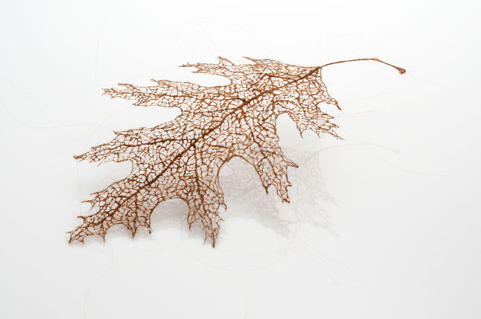 I Make Leaves Out Of Human Hair