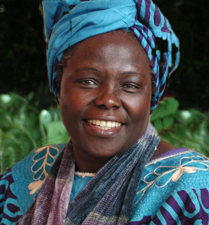 Political Activist Dr. Wangari Maathai Founded The Green Belt Movement, 1977.