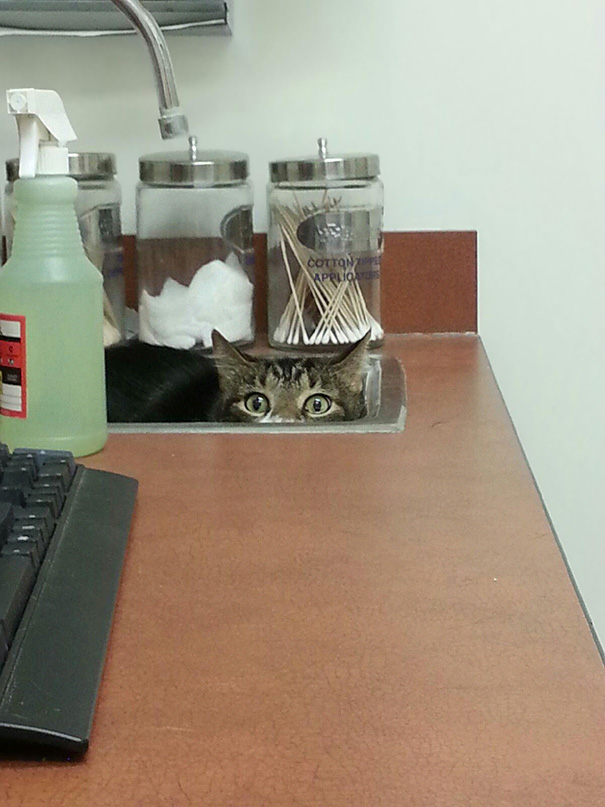 My Dad's 20 Lb Cat Hiding From The Vet
