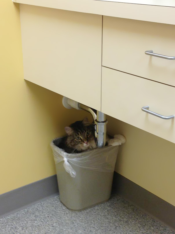 My Cat Was Afraid Of The Vet, So He Hid