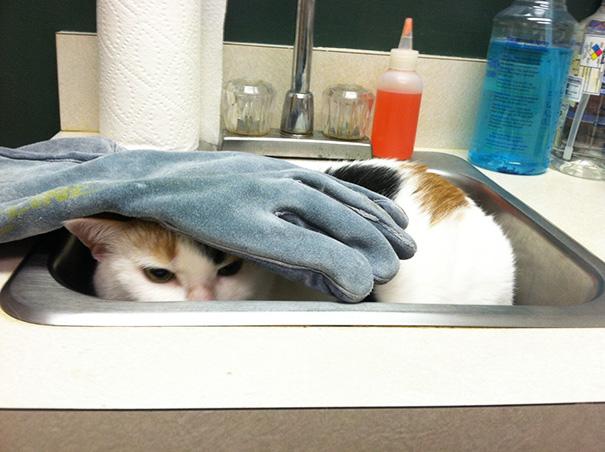 Ally In The Vet's Sink