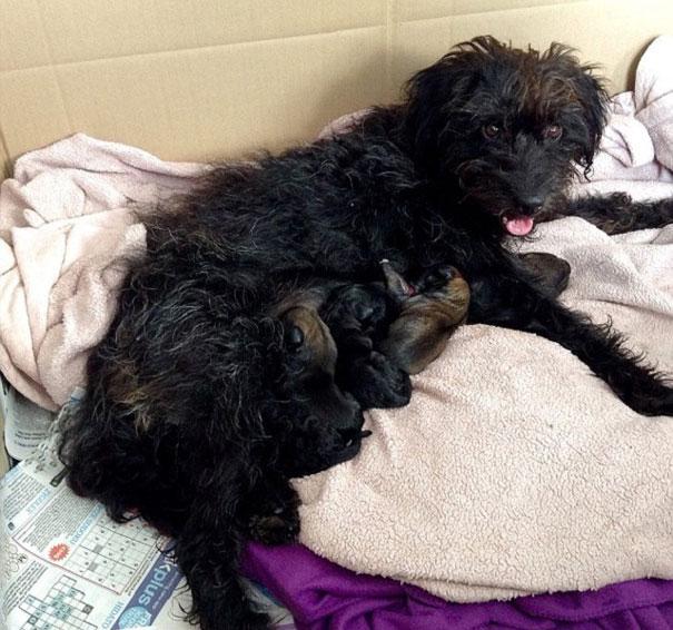 adopt-dog-saves-woman-from-attack-crete-georgia-bradley-13