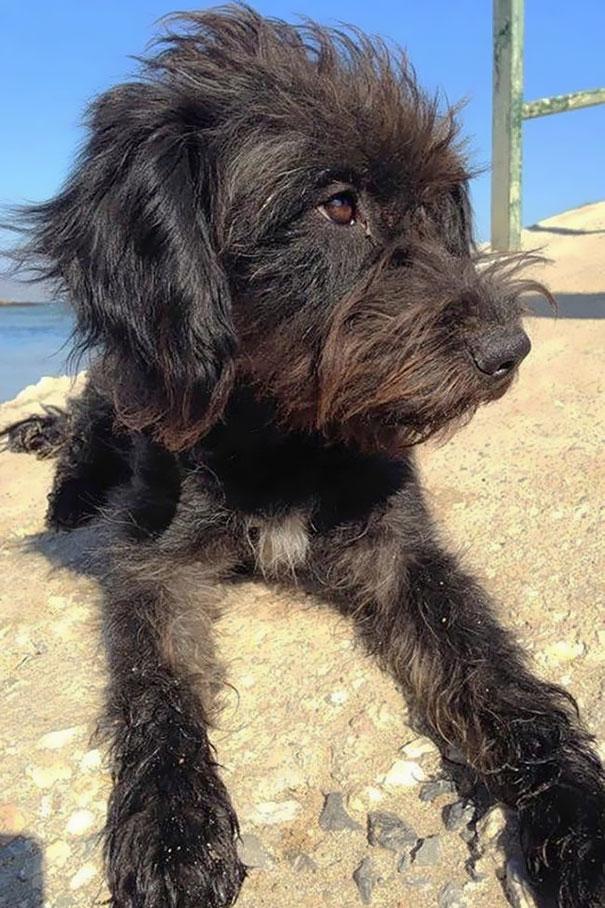 adopt-dog-saves-woman-from-attack-crete-georgia-bradley-14