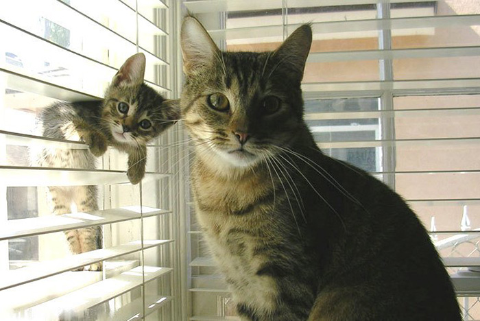 Cat With Her Mini-me