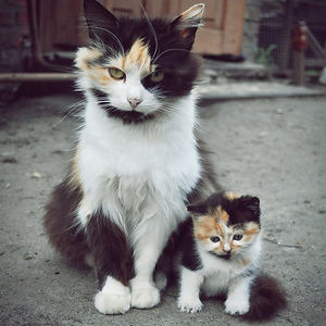 The Cutest Little Girl