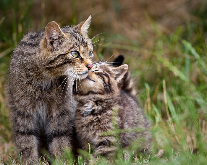 Кошки и их котята