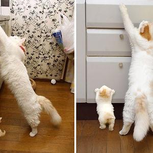 The Same Cat's Mini-Me