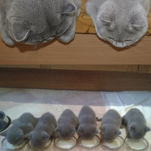 Look At These Little Fluffy Cat Nuggets