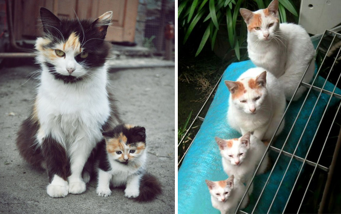 30 Cats With Their Cute Mini-Mes