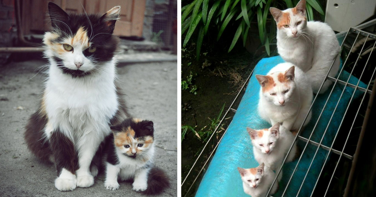 73 Cats With Their Cute Mini-Mes