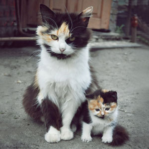 15+ Cats With Their Cute Mini-Mes