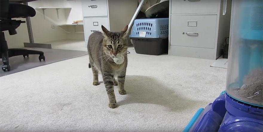 cat-feeder-makes-cat-hunt-for-food-ben-millam-4
