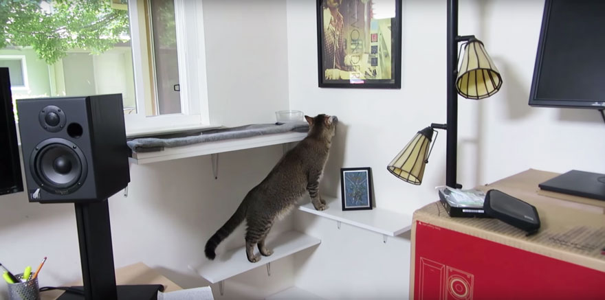 cat-feeder-makes-cat-hunt-for-food-ben-millam-6