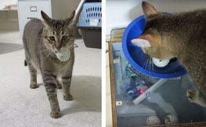 Guy Builds Cat Feeding Machine That Requires His Kitty To Hunt For Food