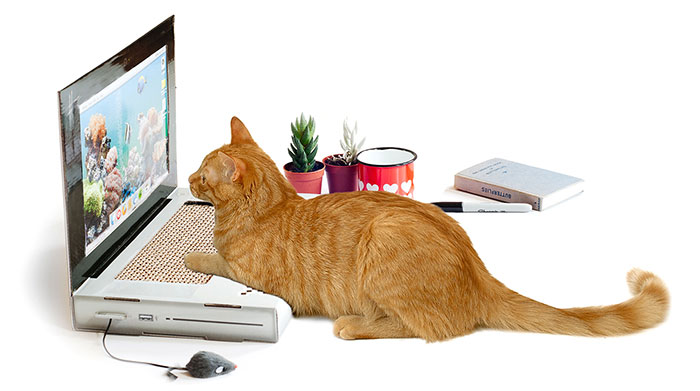 Laptop Scratching Post Lets Your Cat Work On A Computer Without Destroying Yours