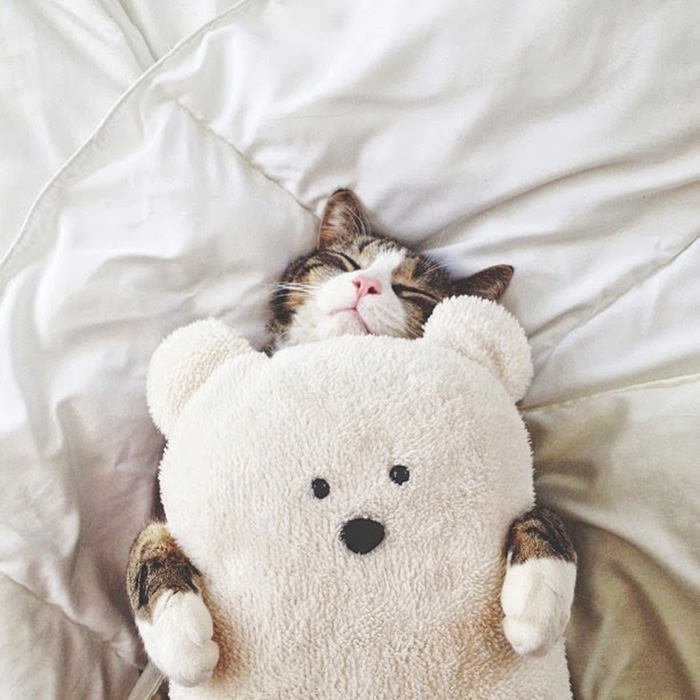 Kitten Sleeping With A Teddy Bear
