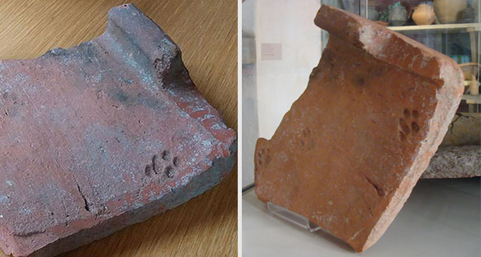 2000-Year-Old Paw Print Proves Cats Never Cared About Your Stuff